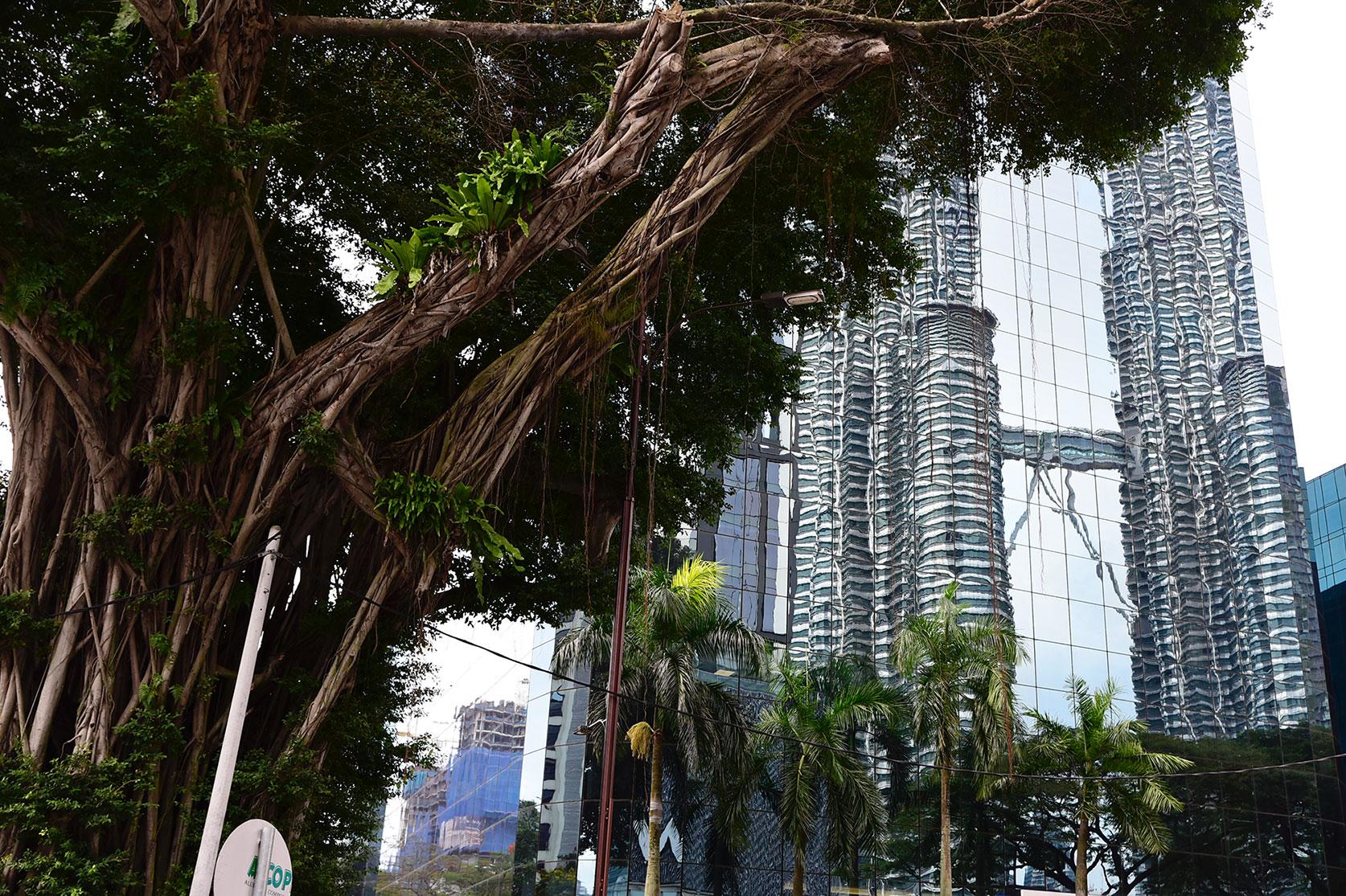 Reflektion Petronas Tower